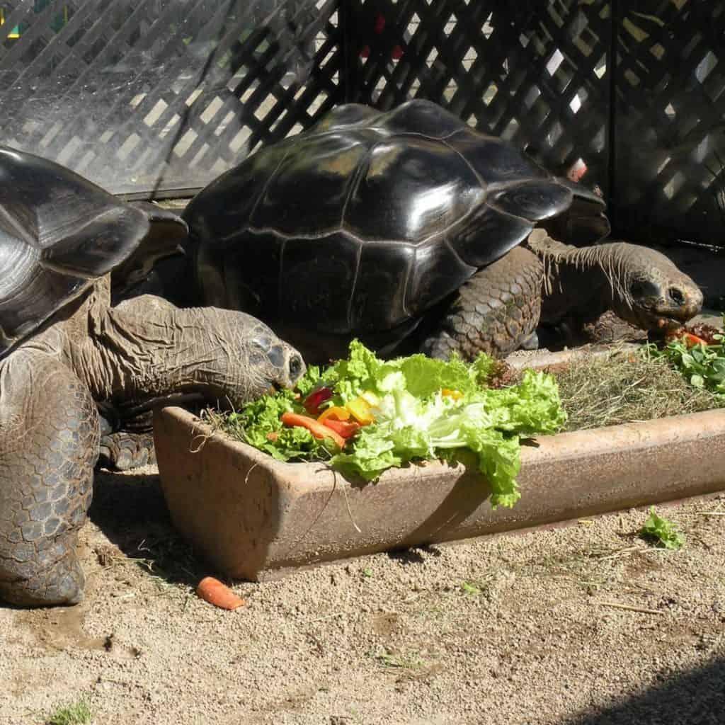 Schildkröten Reptilienzoo Happ Ehekrise