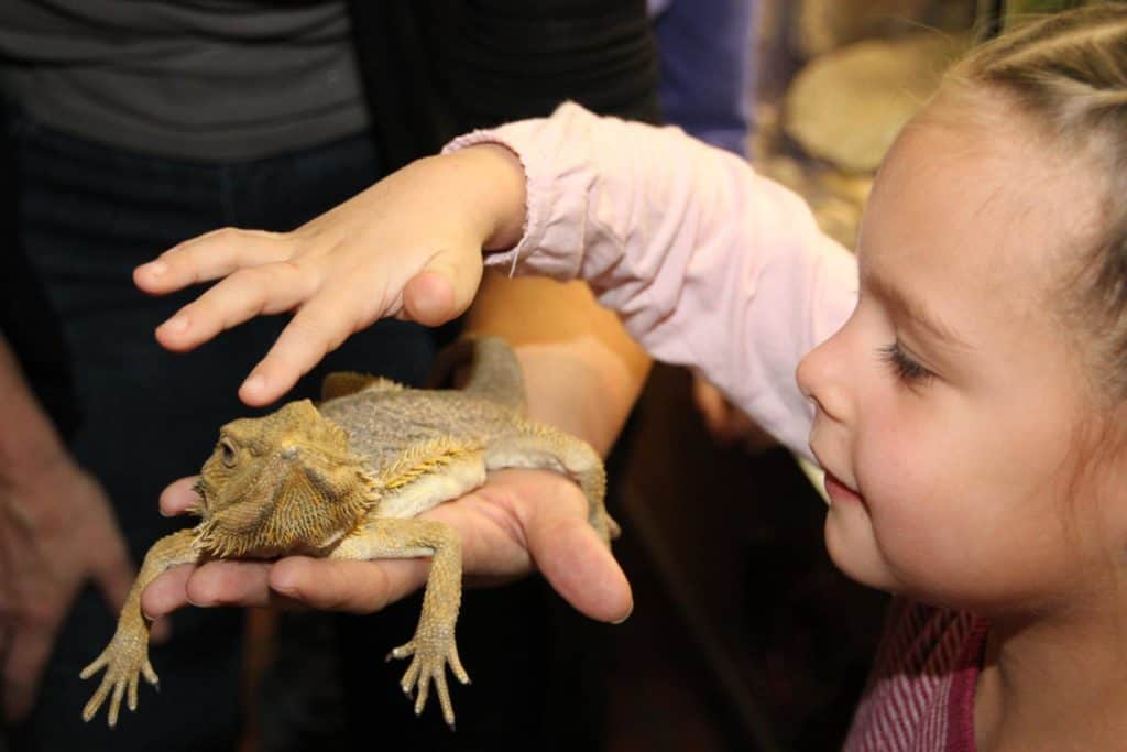 Kind mit Echse im Reptilienzoo Happ in Klagenfurt
