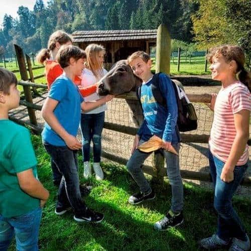 Familienfreundliches TOP-Ausflugsziel Tierpark Rosegg Kärnten