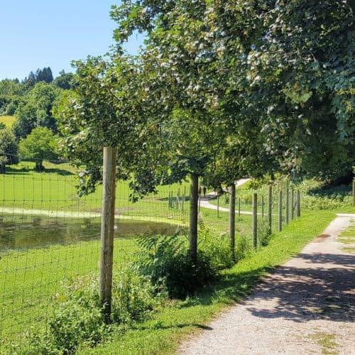 Ausflug mit Kindern in Kärnten Tierpark Rosegg Rundweg