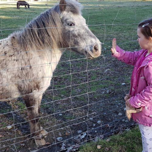 Ausflug Tierpark Rosegg Kärnten Kind Pony