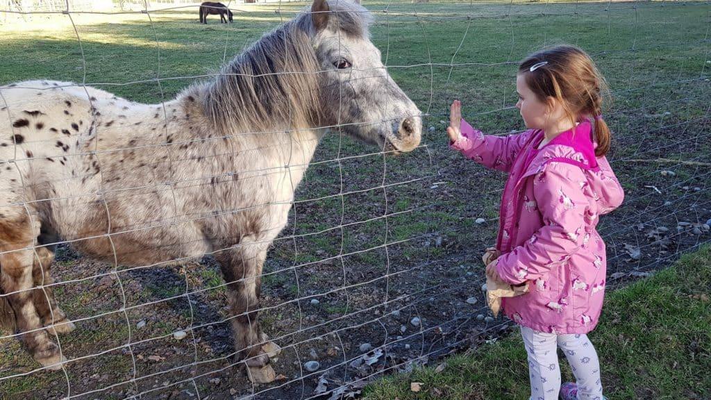Tiere füttern und streicheln im kinderfreundlichen Tierpark Rosegg, Kind mit Pony