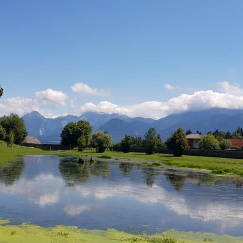 Bison Areal Tierpark Rosegg Sommer mit Kindern in Kärnten