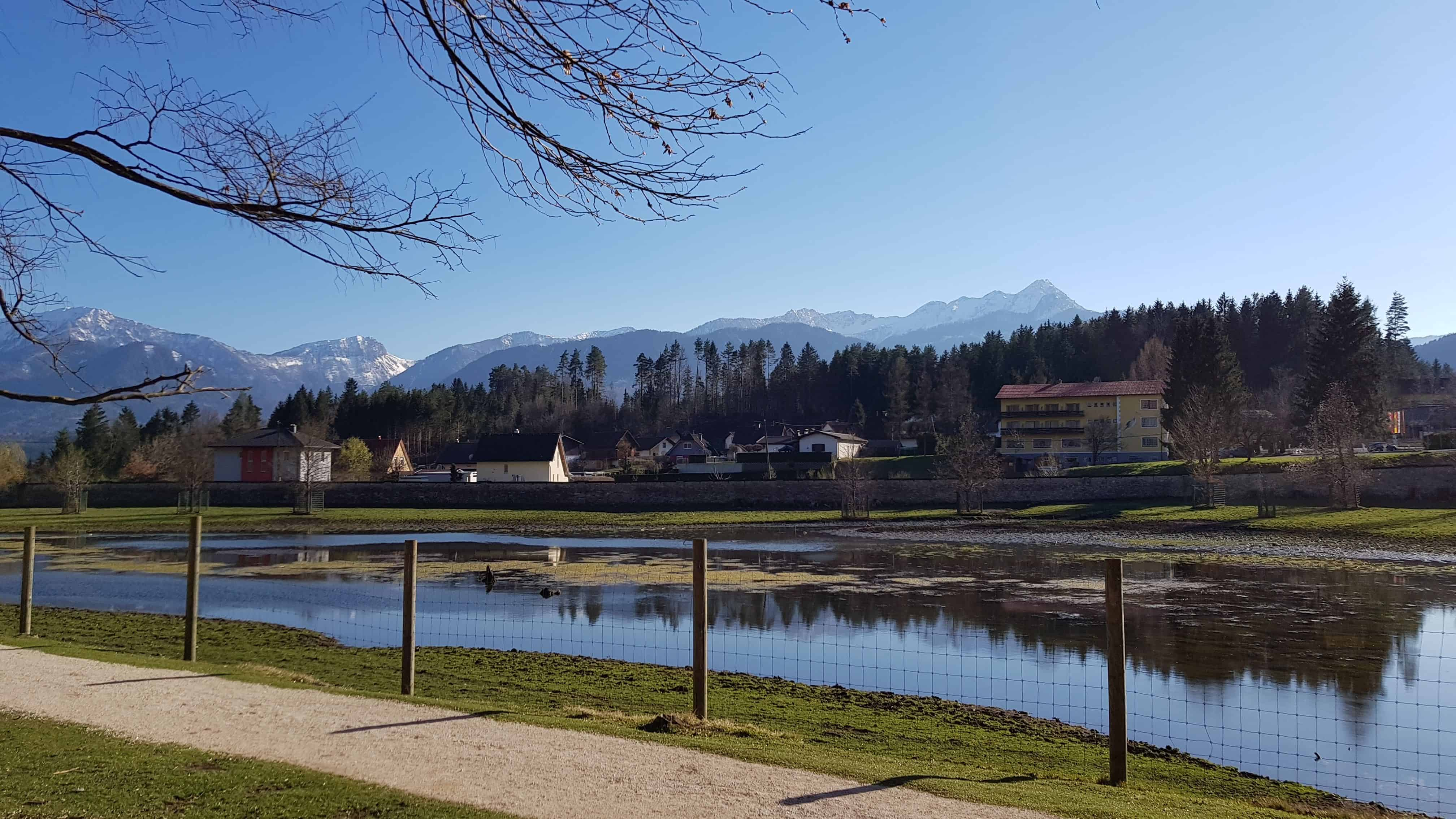 Bison-Gehege Tierpark Rosegg Blick auf Karawanken Kärnten