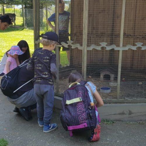 Familien füttern Tiere im Streichelzoo Tierpark Rosegg Ausflugsziel Kärnten