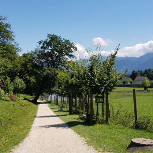 Kinderwagentauglicher Weg durch Tierpark Rosegg Kärnten