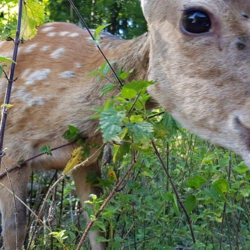 freilaufende Tiere & Rehe im Tierpark Rosegg Nähe Wörthersee