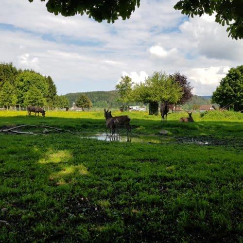 Gehege Dammwild und Esel im Tierpark Rosegg Familienausflug