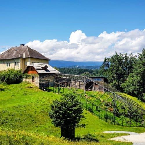 Kärntens TOP Ausflugsziele Tierpark Rosegg Österreich Wildtierpark Waldrappe