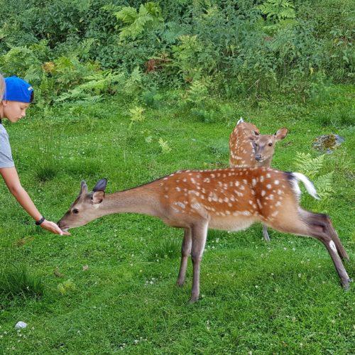 Kinder füttern Rehe im Tierpark Rosegg Kärnten