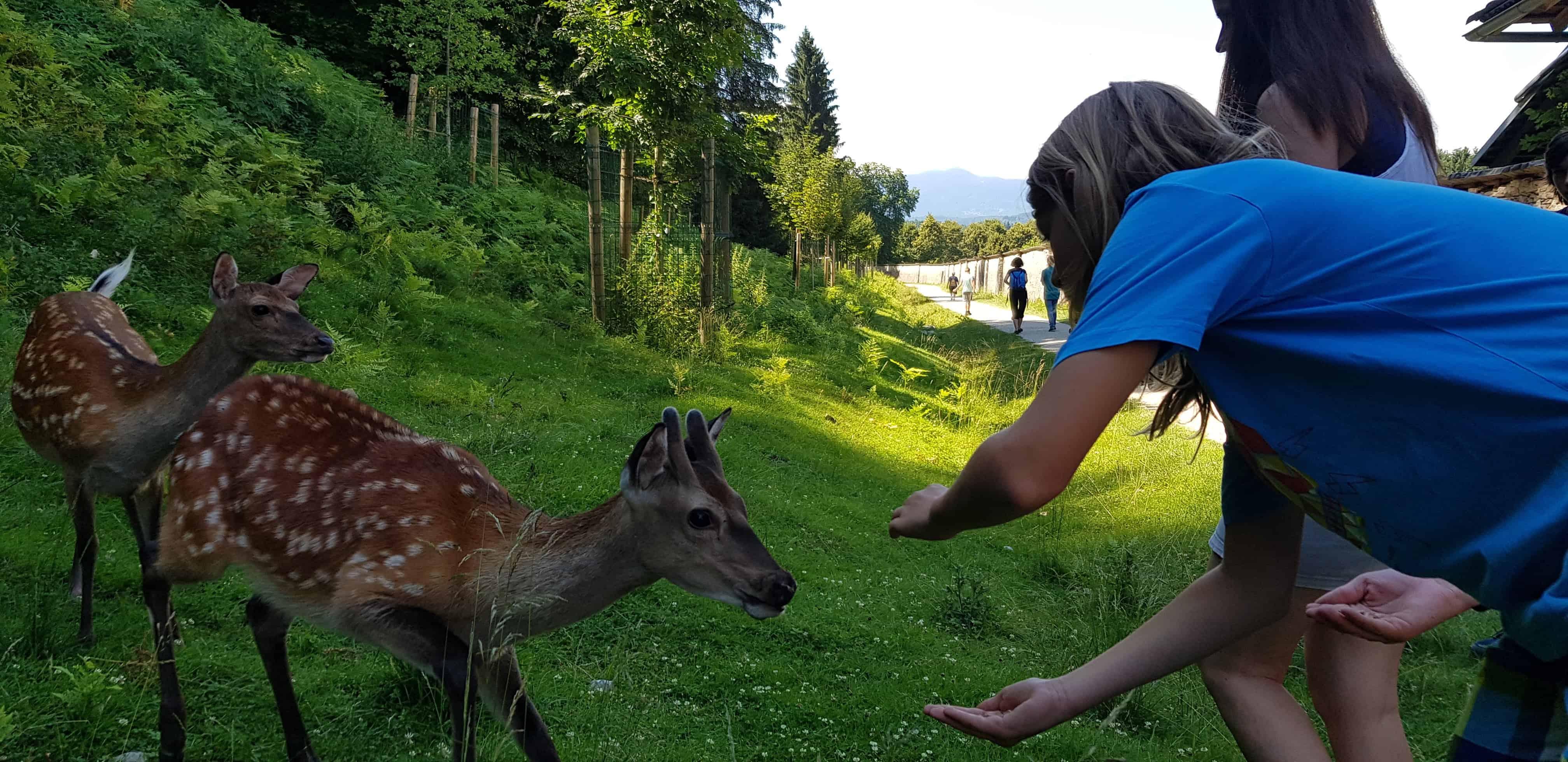 Kinder füttern Tiere im familienfreundlichen Tierpark Rosegg Kärnten
