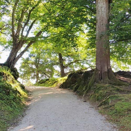 kinderwagenfreundliche Wege durch Tierpark Rosegg Kärnten Ausflugsziele