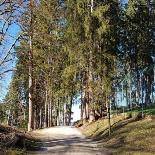 Rundwanderweg Tierpark Rosegg Frühling Ausflug Kärnten mit Kindern