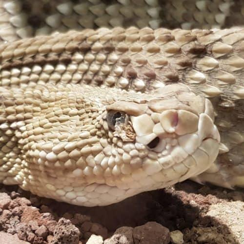 Exotische Schlangen im ganzjährigen Ausflugsziel Reptilienzoo Happ in Klagenfurt