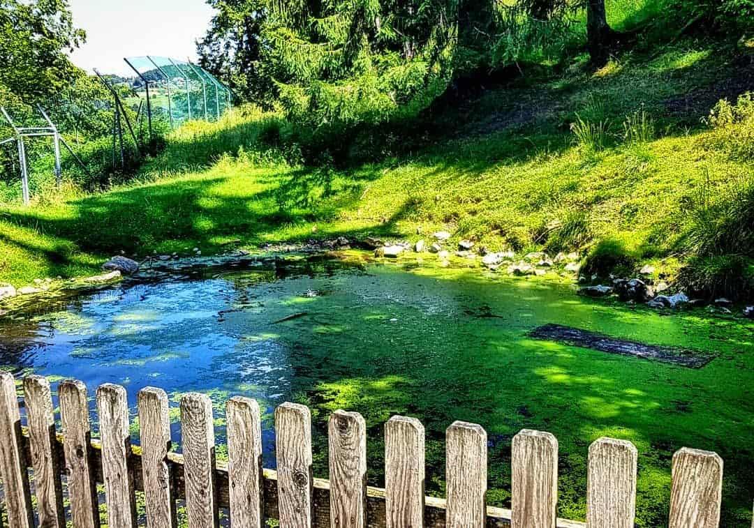 Teich im Tierpark Rosegg kinderfreundliche Ausflugsziele Kärnten