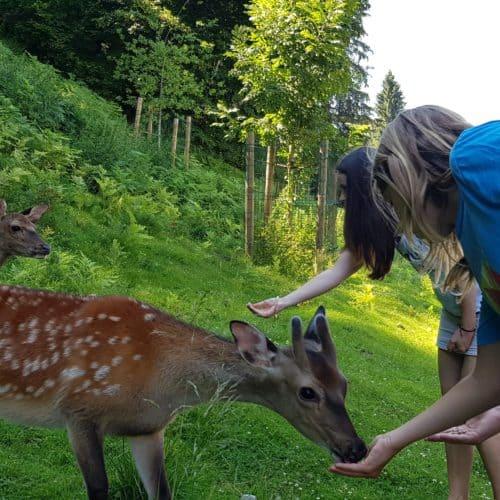 Kinder füttern die Rehe im Ausflugsziel Tierpark Rosegg Kärnten Wörthersee