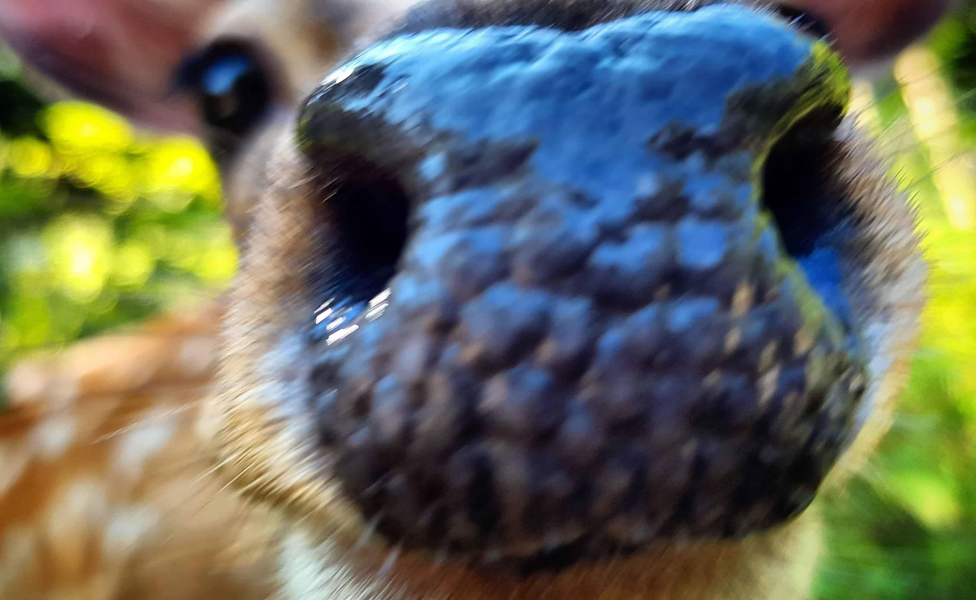 Tiere füttern streicheln kinderfreundliches Ausflugsziel Kärnten Tierpark Rosegg