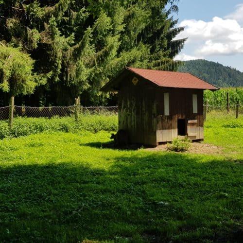 tierfreundliche Gehege Tierpark Rosegg mit Kindern in Kärnten