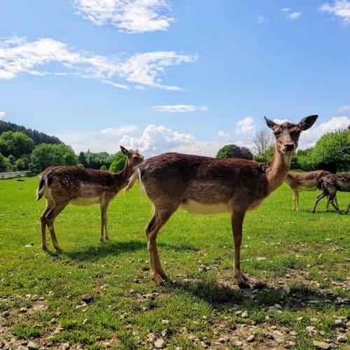 Tierpark Rosegg kinderfreundliche Ausflugsziele Kärnten Wörthersee