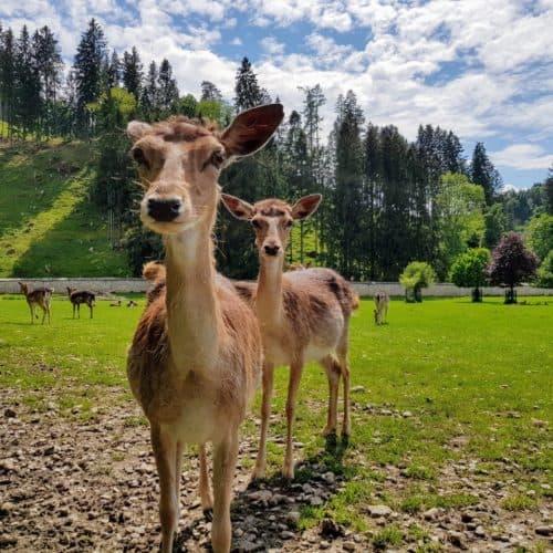 Tierpark Rosegg Wild kinderfreundliche Ausflugsziele Kärnten Wörthersee