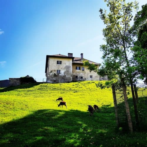 TOP Ausflugsziele Kärnten Tierpark Rosegg Ruine - Familien Aktivitäten Wörthersee