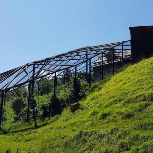 Waldrapp-Gehege Tierschutz Projekt Tierpark Schloss Labyrinth Rosegg Kärnten