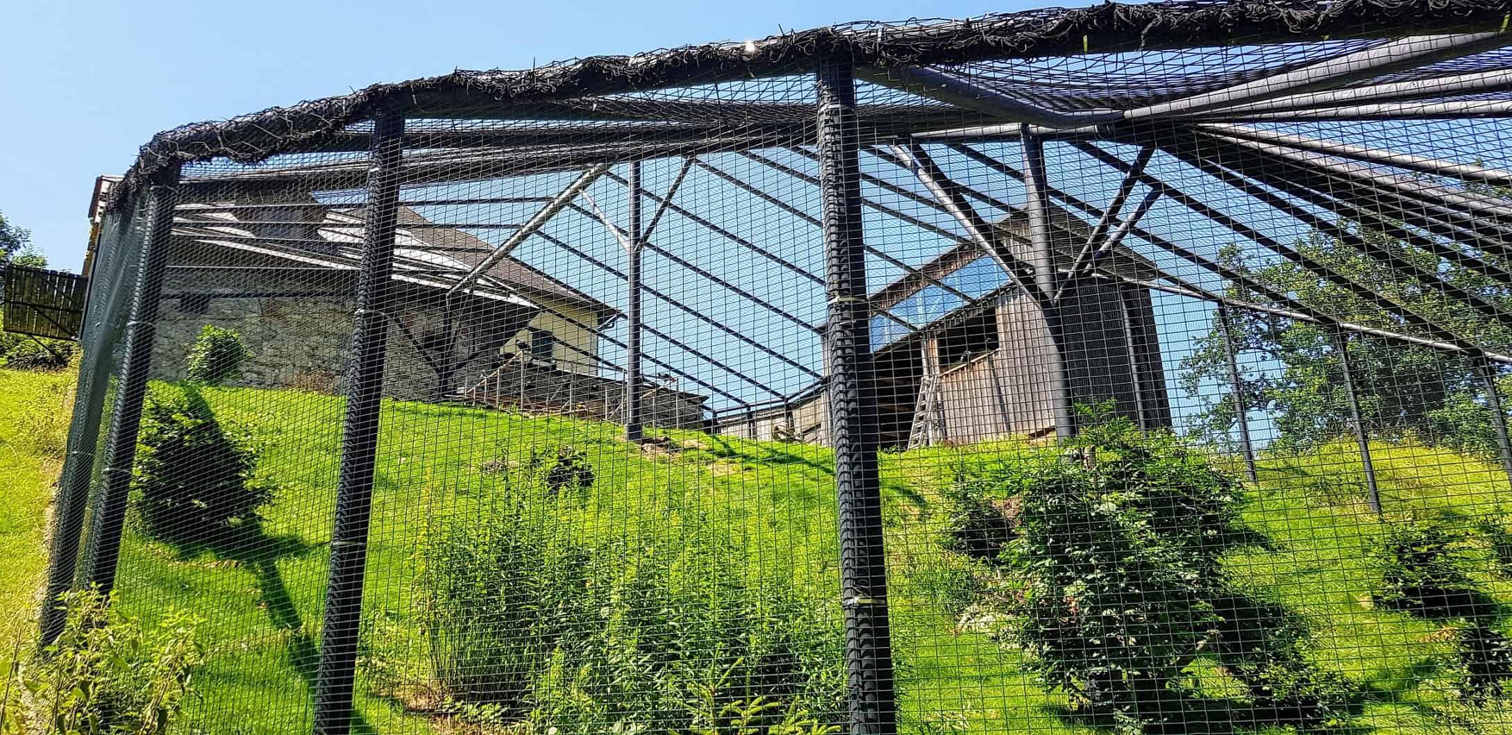 Waldrapp-Gehege Tierpark Schloss Labyrinth Rosegg