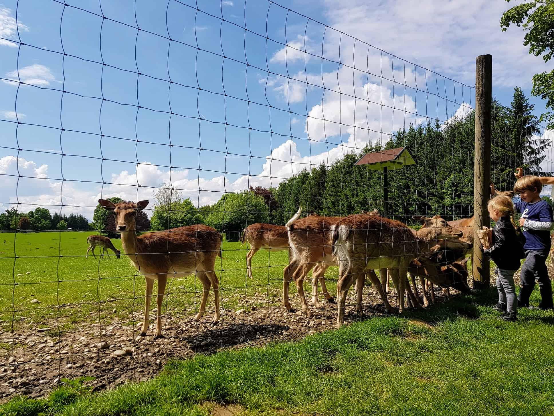 Wildgehege Tierpark Rosegg Kärnten Ausflugsziele für Kinder Zoo