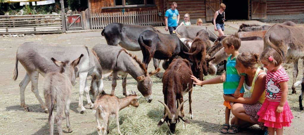 Ausflug mit Kindern in Kärnten - Eselpark Maltatal