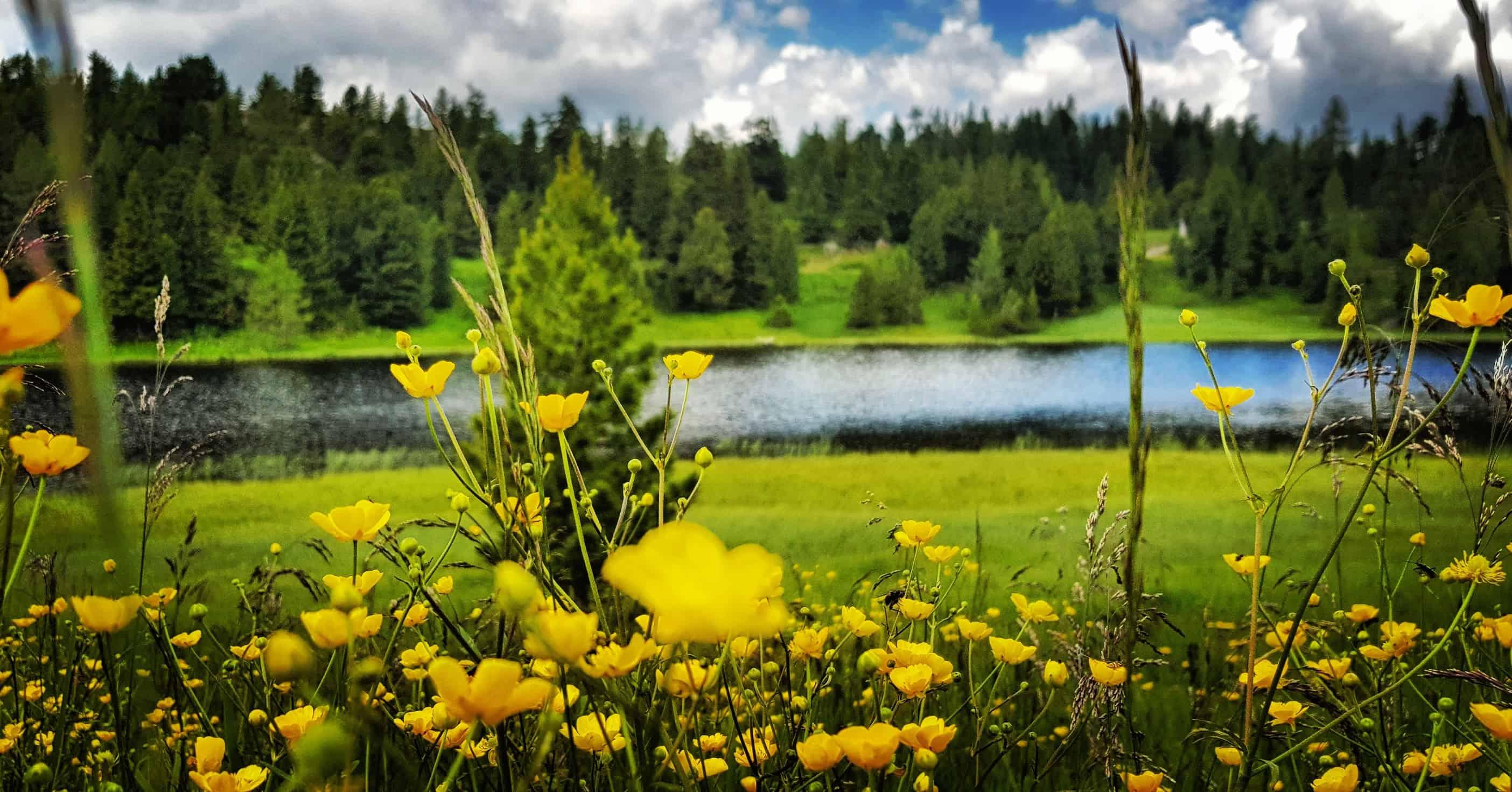 Der Schwarzsee im Frühling mit Blumen - Ausflugstipp Wandern auf der Turracher Höhe in Kärnten Österreich