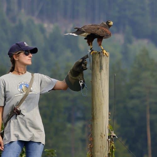 Falknerin Laura mit Greifvogel bei Flugschau Adlerarena Burg Landskron