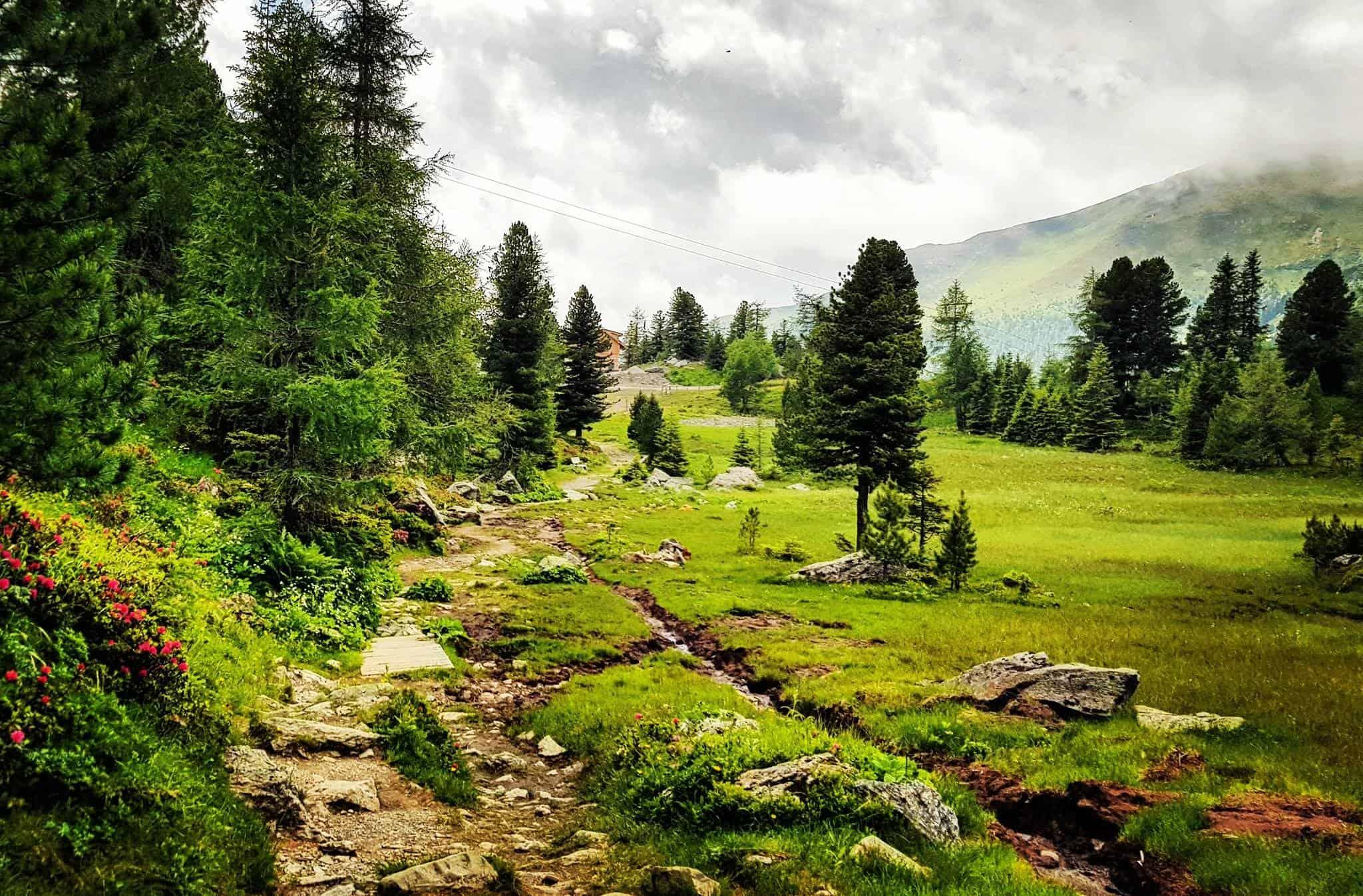 Wandern auf der Turracher Höhe in Kärnten-Steiermark - Wanderweg mit Almrausch bei Regenwetter in Österreich