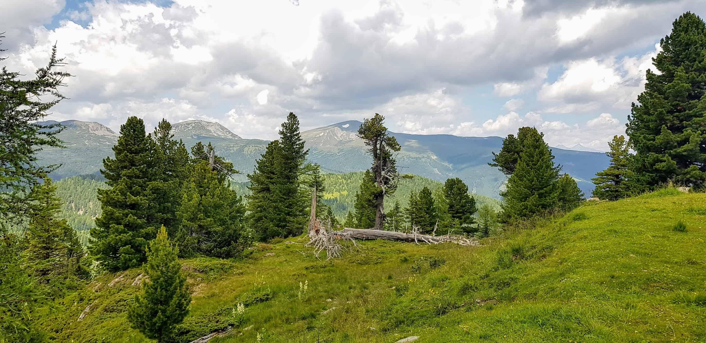 Wandern - alpine Berglandschaft mit Bäumen und Nockbergen auf der Turracher Höhe in Kärnten - Österreich