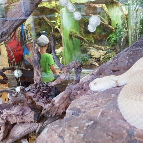 Ausflug mit der Familie in den Klagenfurter Reptilienzoo Happ am Wörthersee - sehenswert in Österreich
