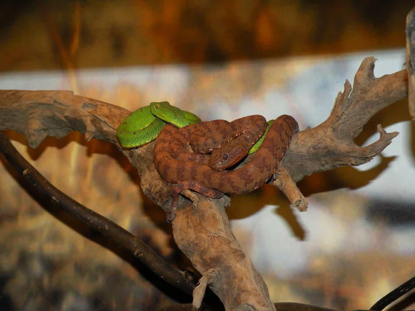 Ausflugstipps am Wörthersee - Reptilienzoo Happ in Klagenfurt mit vielen Schlangenarten