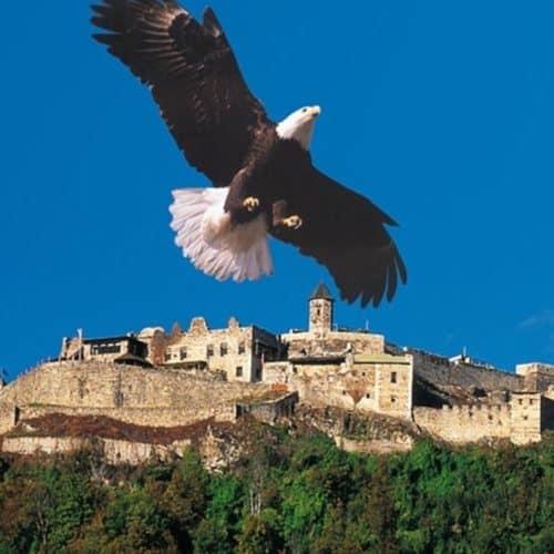 Kärntens TOP-10 Ausflugsziele: Adlerarena bei Burg Landskron - Greifvogelschau mit Adler und Eulen
