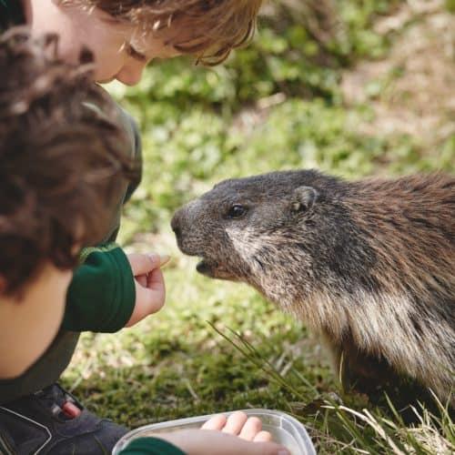 Familienausflug Kärnten: Großglockner Hochalpenstraße - Kinder füttern Murmeltier - TOP-10 Ausflugsziele Thema: Österreich Urlaub