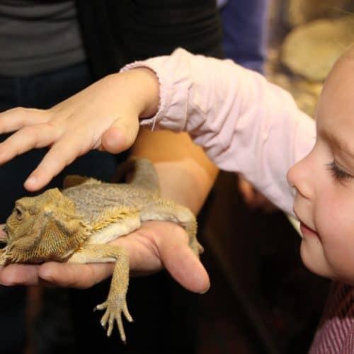 Kind mit Eidechse im kinderfreundlichen Ausflugsziel Reptilienzoo Happ in Kärnten am Wörthersee