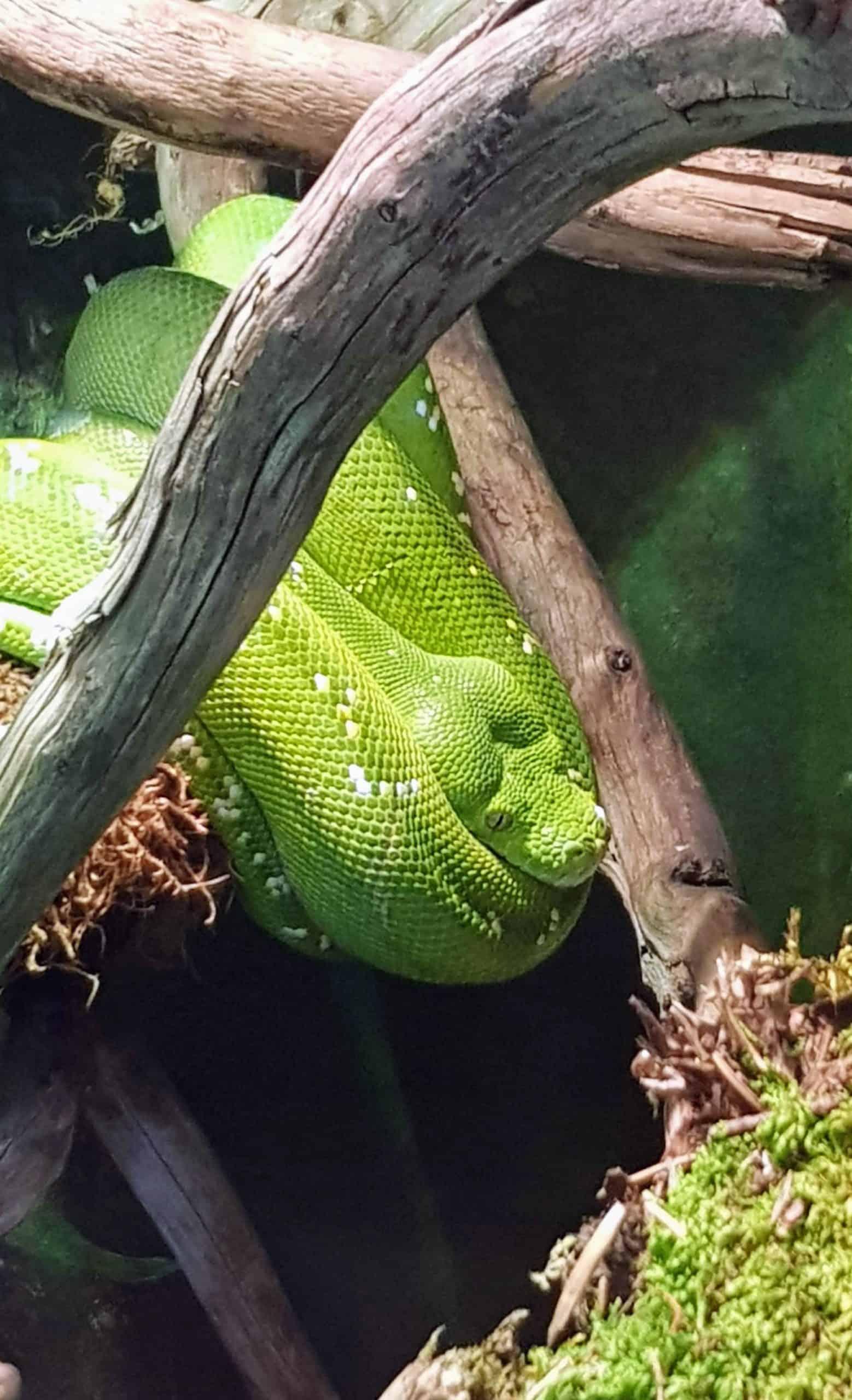 sehenswerter Reptilienzoo Happ in Klagenfurt mit Schlangen und Echsen - Ausflugsziel in Kärnten