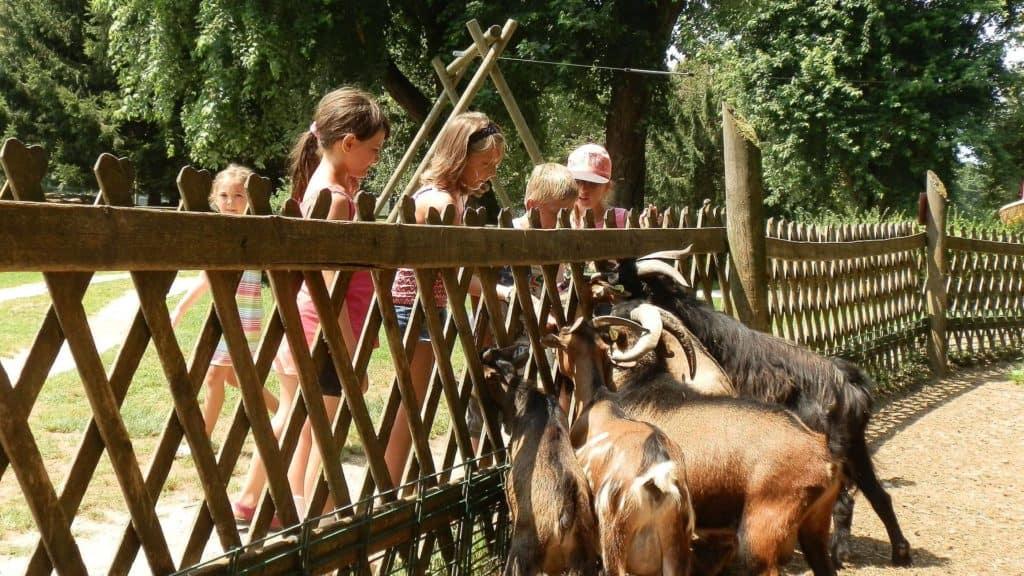 Kinder im familienfreundlichen Tierpark Rosegg in Kärnten