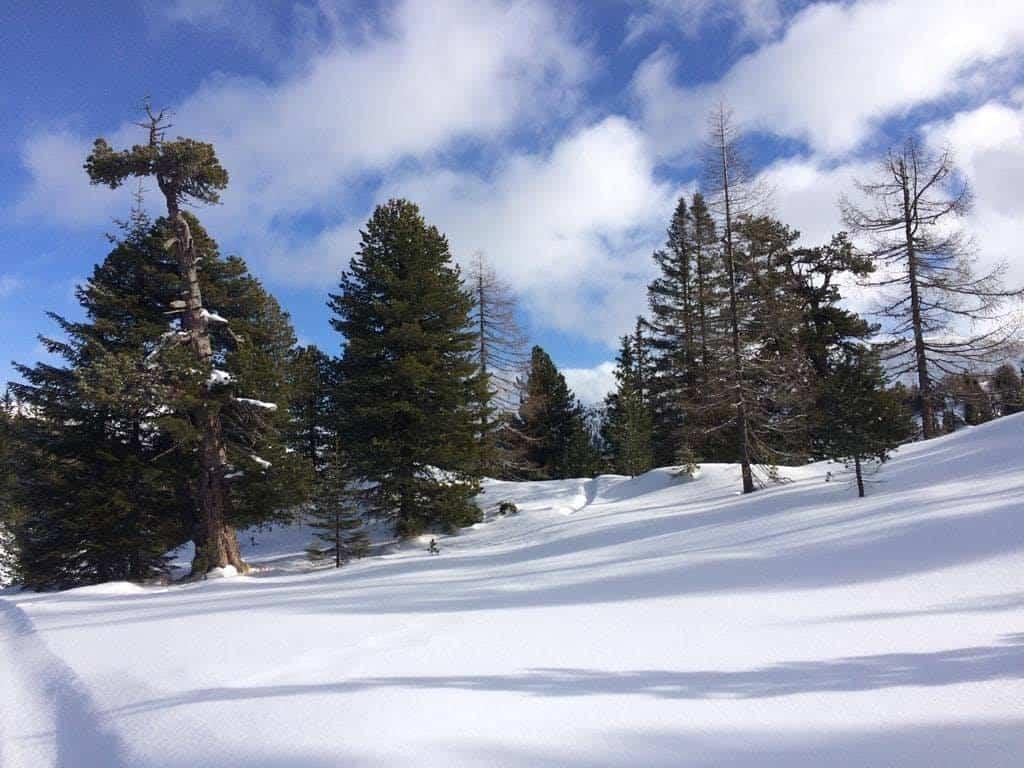 Turracher Höhe Winterwandern Schneelandschaft