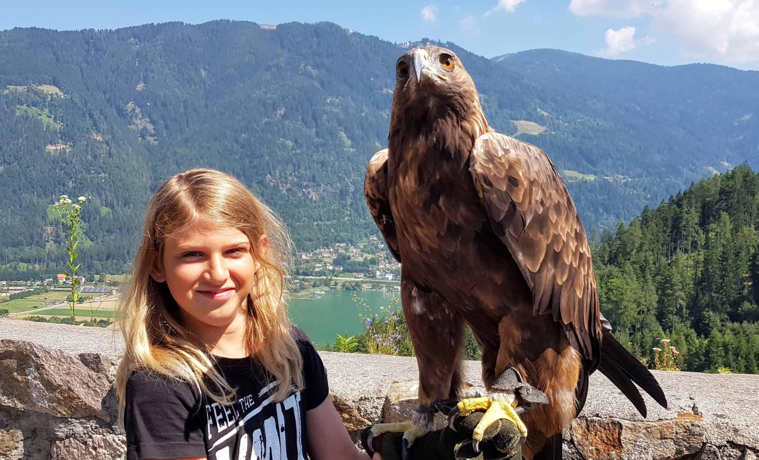 Gutschein Foto mit Greifvogel Steinadler in der Adlerarena Landskron Kärnten am Ossiacher See