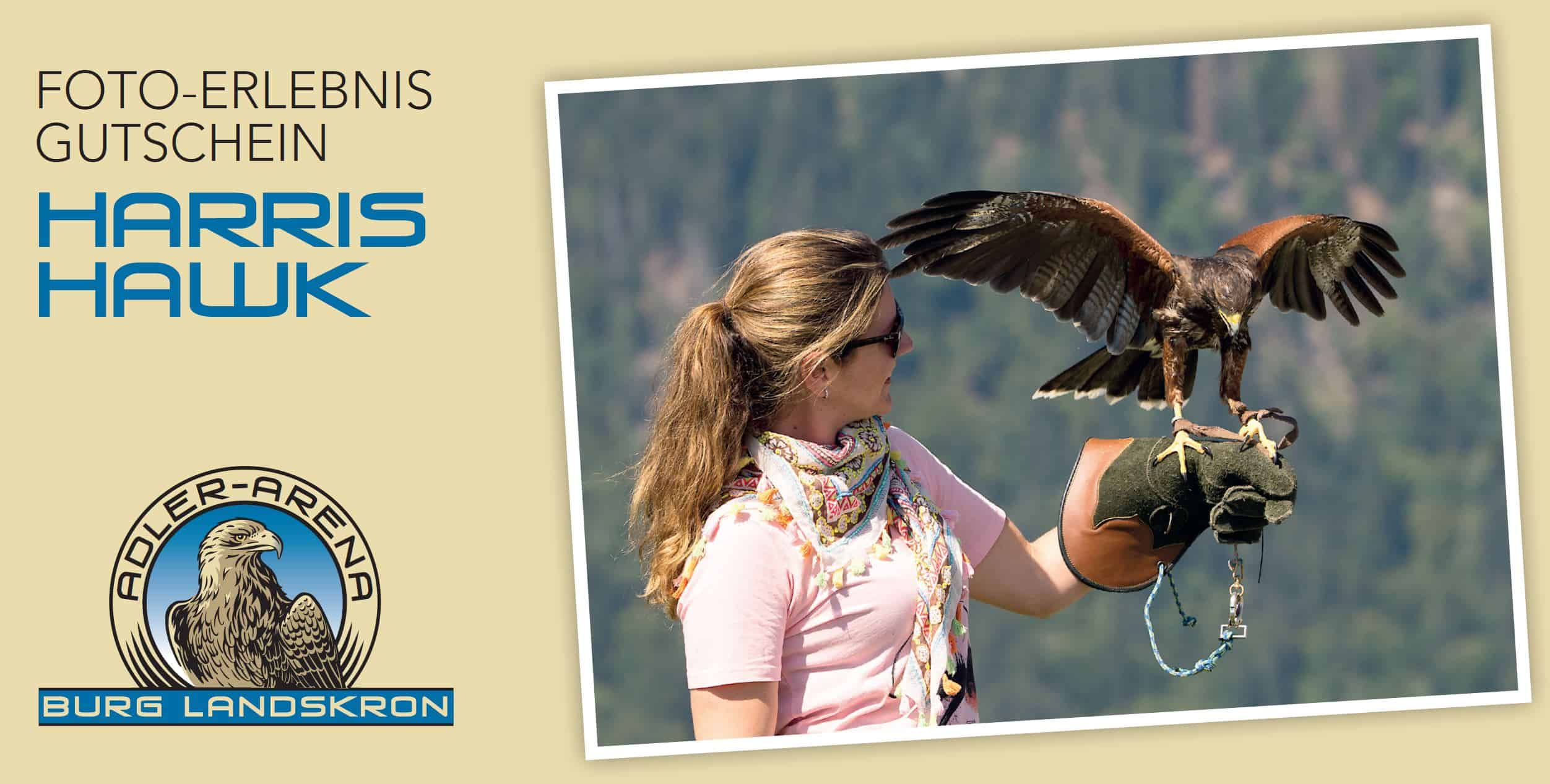 Gutschein für Foto mit Greifvogel Harris Hawk auf der Adlerarena Burg Landskron in Kärnten - Urlaub in Österreich am Ossiacher See