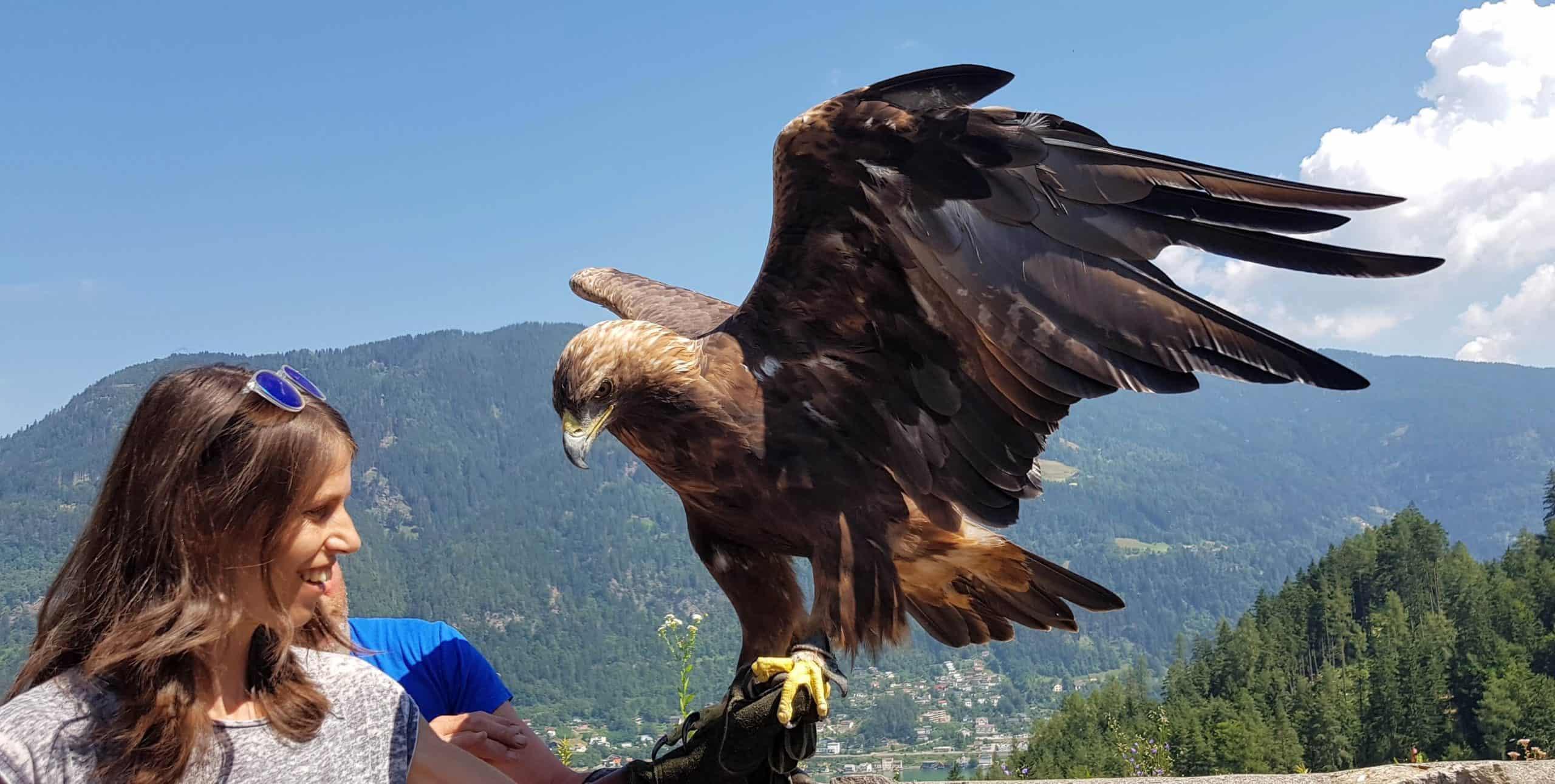 Gutschein Foto mit Greifvogel Steinadler in der Adlerarena Landskron Kärnten - Geschenksidee Ausflugsziele