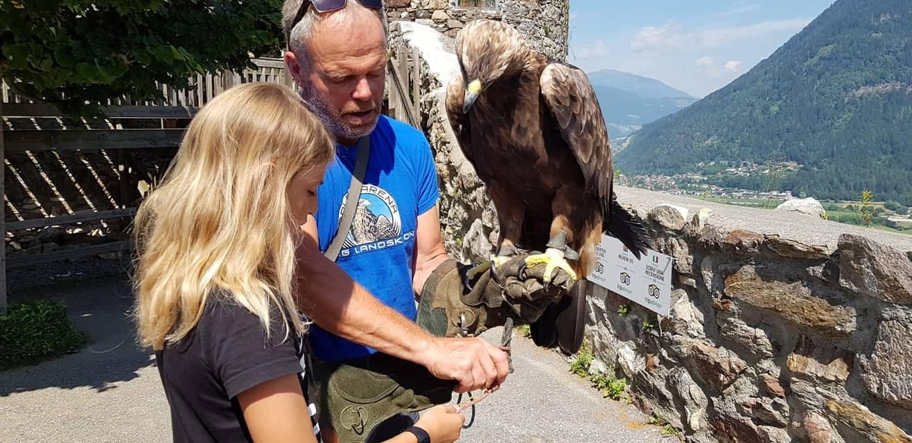 Falkner mit Kind und Steinadler für Foto-Erlebnis auf der Adlerarena Landskron am Ossiacher See