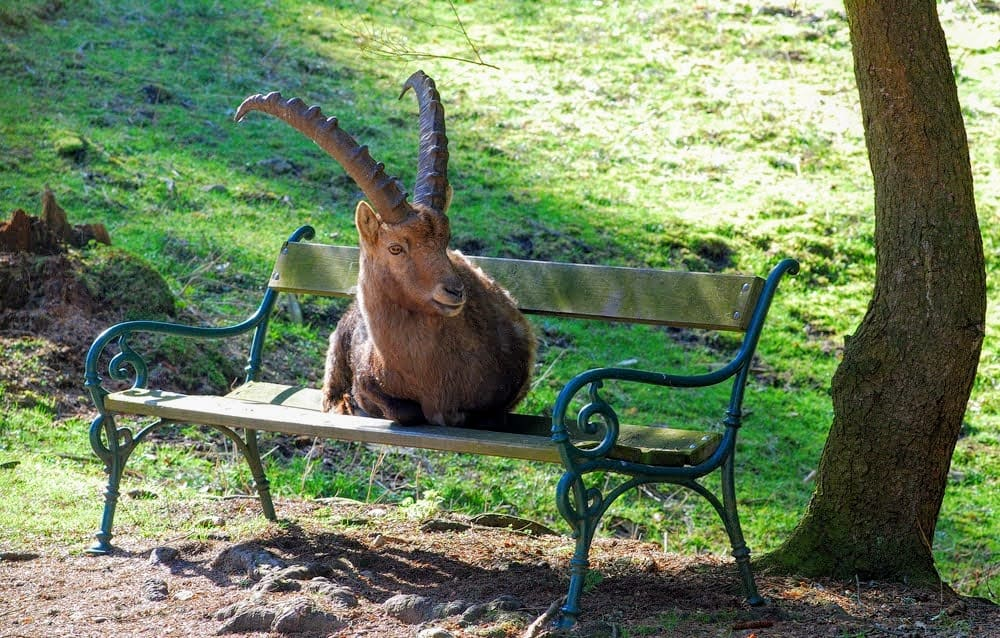 Tierpark Rosegg Rosental Wörthersee Ausflugsziel