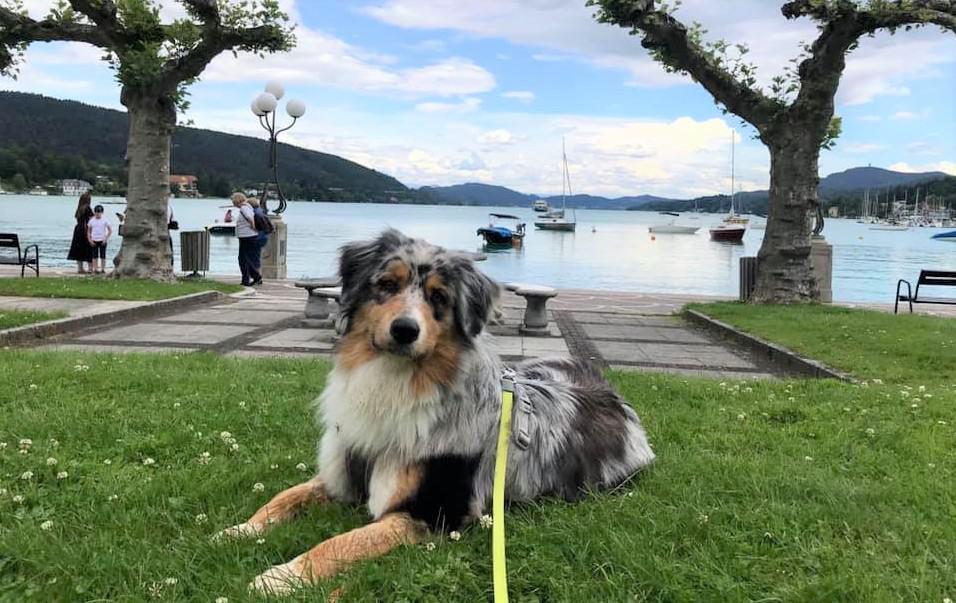 Ausflugsziele mit Hund in Kärnten