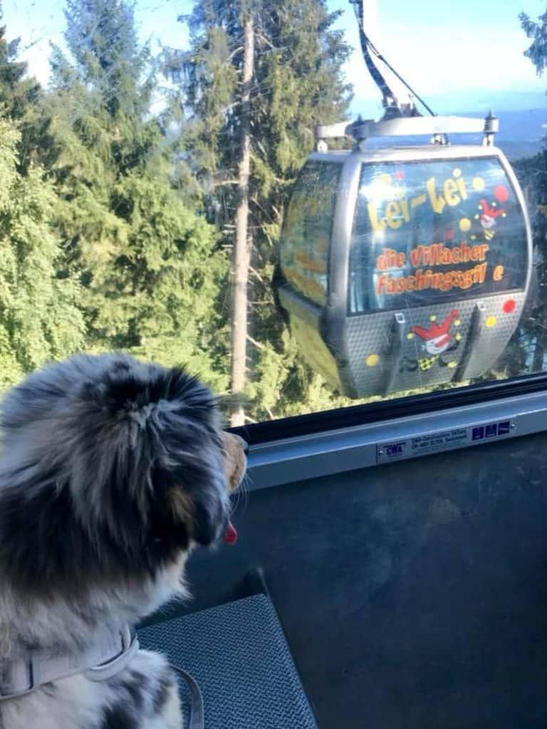 hundefreundliche Bergbahnen in Kärnten - Urlaub mit Hund