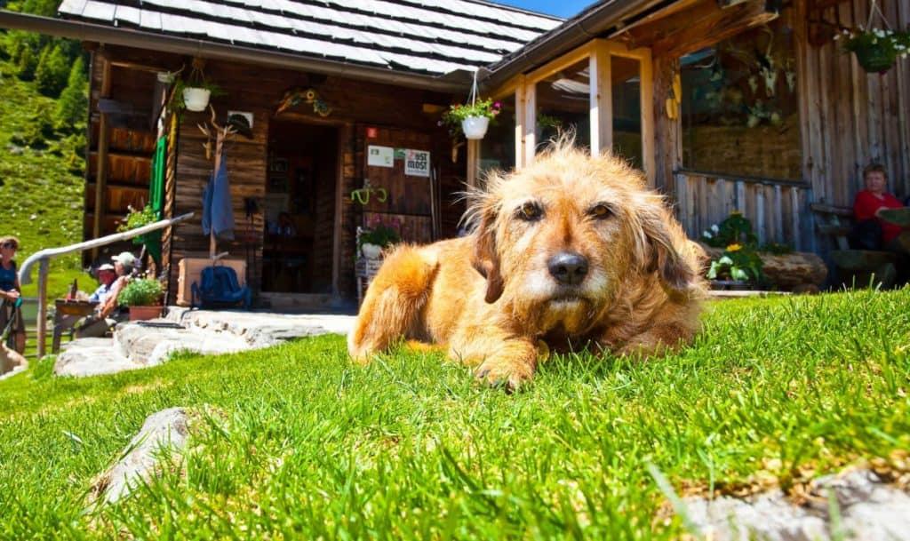 Großglockner Hochalpenstraße mit Hund - hundefreundliche Ausflugsziele