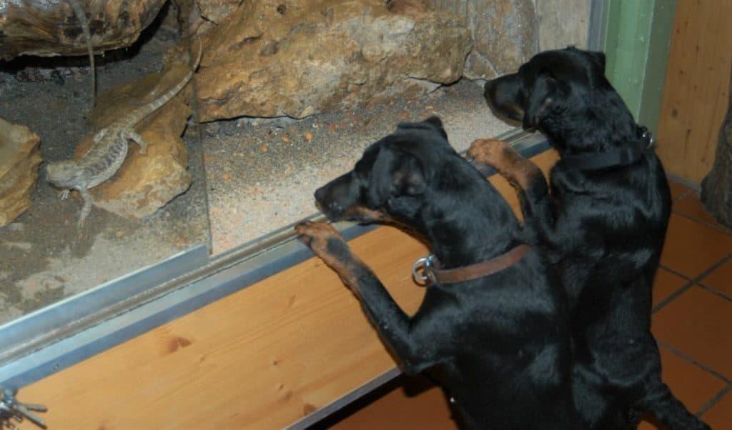 Hunde im Reptilienzoo Happ in Klagenfurt - tierfreundliches Ausflugsziel in Kärnten